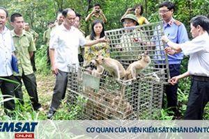 Hướng dẫn áp dụng một số tình tiết định tội về vi phạm quy định bảo vệ động vật hoang dã, nguy cấp, quý, hiếm