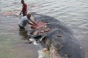 Cá voi chết sau khi nuốt quá nhiều rác thải nhựa