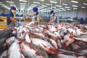 Trung Quốc đẩy mạnh nuôi cá tra, đe dọa doanh nghiệp Việt Nam