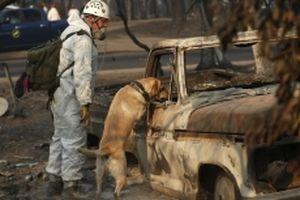 Cháy rừng tại California: Số người chết tiếp tục tăng, mưa có thể xuất hiện