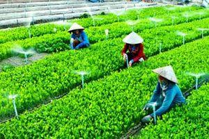 Hà Nội: Giải thể bắt buộc các hợp tác xã nông nghiệp đã ngừng hoạt động lâu ngày