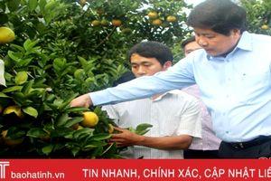 Thứ trưởng Bộ NN&PTNT khuyên người trồng cam Vũ Quang dùng phân bón hữu cơ