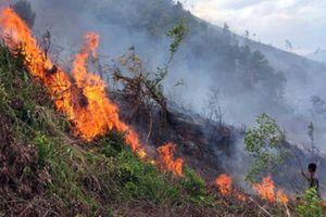 UBND Thành phố Hà Nội chuẩn bị công tác PCCC rừng mùa khô