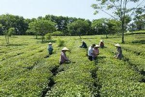 Đảng bộ huyện Quốc Oai lãnh đạo xây dựng nông thôn mới