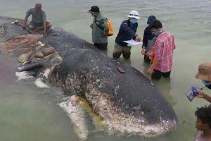 Indonesia: Xác cá nhà táng dạt vào bờ biển với 1.000 mảnh nhựa trong bụng