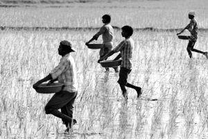 Sao Ấn chi hơn nửa triệu USD trả nợ giúp nông dân