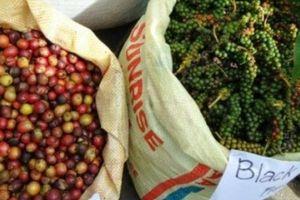 Giá nông sản hôm nay 22/11: Giá cà phê tiếp tục giảm 200 đồng, giá tiêu 'mất' 1.000 đồng