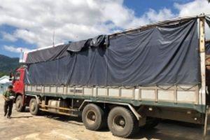 Phát hiện hai xe tải chở gỗ lậu với số lượng lớn ở Đác Lắc