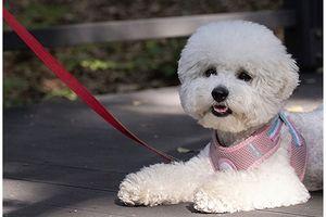Seoul khuyến khích gắn chíp cho thú cưng