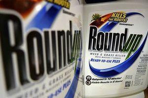 Monsanto kháng án vụ thuốc diệt cỏ Roundup