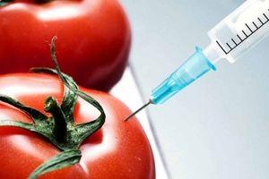 Nigeria: CSOs thúc giục Chính phủ từ chối thực phẩm biến đổi gen