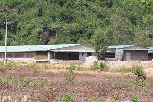 Khu chăn nuôi gia súc tập trung ở xã Nhơn Tân (TX An Nhơn, Bình Định): Cần kiểm soát, ngăn chặn mùi hôi thối phát sinh