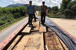 Đắk Lắk: Bắt hai xe tải chở gỗ lậu