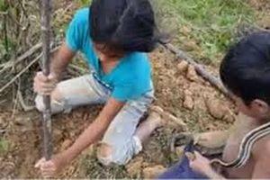 Hai chị em liều mạng bắt trăn, rắn để mưu sinh