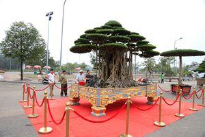 Dàn bonsai 'bạc tỷ' quy tụ tại Hà Nội