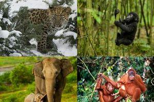 Hướng dẫn BLHS về tội vi phạm quy định bảo vệ động vật hoang dã