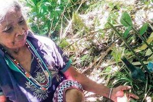 Quảng Nam: Sự thật nơi đàn bà giữ cây ngải yêu kỳ bí trong tận rừng sâu