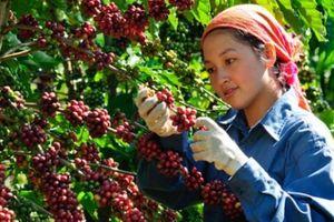 Sắp có 'Ngày cà phê Việt Nam' lần thứ II quy mô, hoành tráng