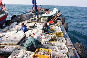 Máy làm đá tuyết từ nước biển 'made in Việt Nam' hỗ trợ khai thác thủy sản