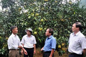 Phát triển bền vững CĂQ: Tăng cường liên kết nông dân và DN