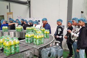 250 thầy cô, học sinh các trường THPT thích thú tham quan nhà máy Number 1 Hà Nam