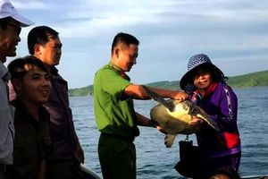 Khởi tố 4 đối tượng nuôi nhốt 28 cá thể rùa biển