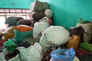 Hải Phòng: Phát hiện nhiều vi phạm tại 3 kho chứa khoảng 3,5 tấn dược liệu
