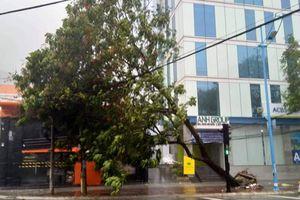 Bão số 9 'quét' vào Vũng Tàu gây mưa to, nhiều cây gãy đổ