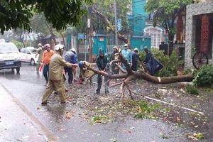 Bão số 9 đổ bộ: Đường phố Vũng Tàu ngập nặng, cây gãy đổ hàng loạt
