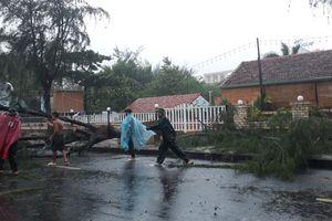 Ảnh hưởng của bão số 9: Nhiều cây xanh bị gãy đổ tại TP. Vũng Tàu