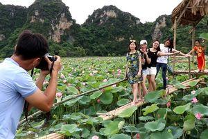 Hút khách du lịch nhờ trồng sen