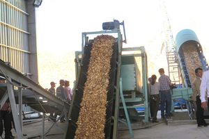 Xuất khẩu dăm gỗ thuận lợi, người trồng rừng phấn khởi!