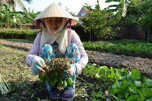 Để có vườn rau sạch tại nhà