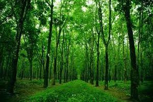 Nhiều chính sách đầu tư bảo vệ và phát triển rừng