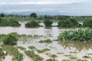 Ảnh hưởng bão số 9, hàng trăm ngôi nhà ở Bình Thuận bị ngập sâu trong nước