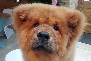 Chó cắn cảnh sát bị bắt giam 9 tháng, hàng ngàn người muốn cứu