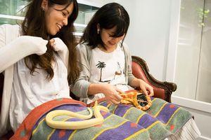Quán cà phê… rắn không dành cho người yếu tim ở Nhật