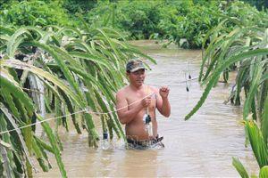 Bình Thuận: 200 hộ dân ở huyện Hàm Thuận Nam bị cô lập do mưa lũ