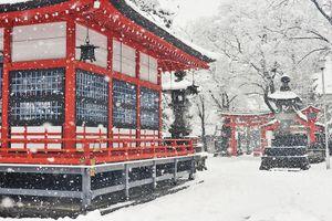Vì sao bạn nên đi du lịch Nhật Bản vào mùa đông?