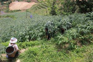Lào Cai: Giải bài toán khó cho tích tụ ruộng đất