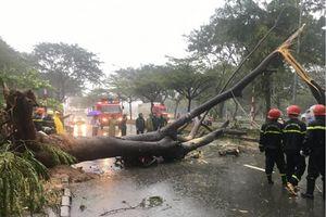 TP.HCM: Đã có người chết vì bão số 9, học sinh nghi học ngày thứ Hai