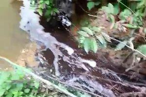 Xã Kỳ Phong (huyện Kỳ Anh, tỉnh Hà Tĩnh): Người dân khốn khổ vì ô nhiễm từ trại lợn