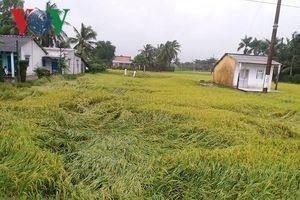Bão số 9 gây thiệt hại nặng cho nông nghiệp Tiền Giang