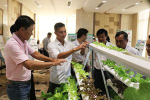 Mekong Xanh hướng đến phát triển bền vững ĐBSCL