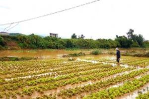 Lâm Đồng, Phú Yên và Bình Thuận khẩn trương khắc phục thiệt hại do bão số 9