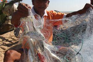 Làng chài Phước Hải trúng mẻ cá lớn sau bão số 9