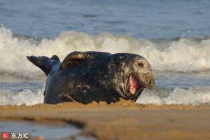 Hải cẩu 'cười như được mùa' khi nhiếp ảnh gia chú ý