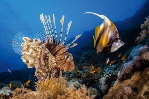 Ảnh tuyệt đẹp về động vật dưới lòng đại dương xanh