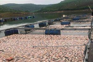 Cá chết hàng loạt sau một đêm, người dân có nguy cơ trắng tay