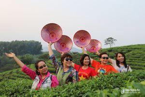 Du khách Thái Lan thích thú tham quan đảo chè Nghệ An mùa đông